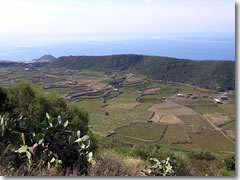The fields of Pantelleria