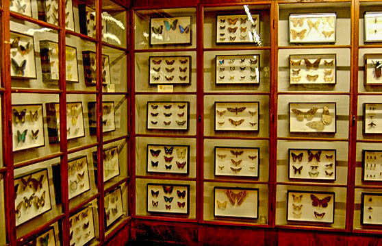 The Butterfly Room at Museo Zoologico La Specola, Florence. (Photo by Curious Expeditions)
